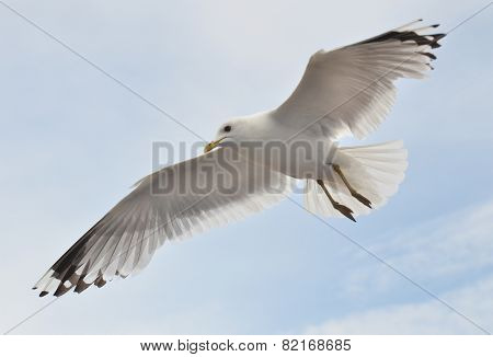 Seagull Soaring In The Cloudly Sky