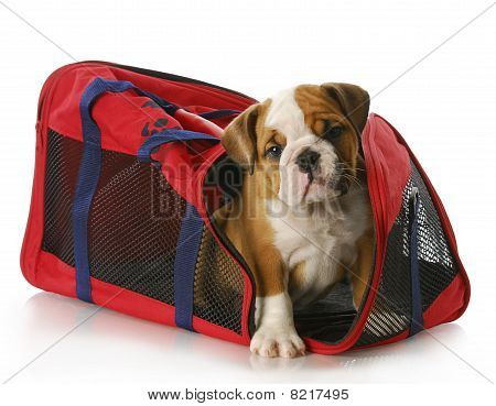 Puppy In A Travel Bag