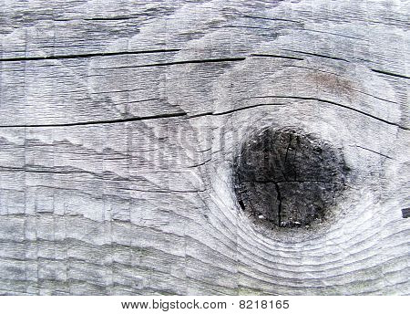 Tree Structure Close Up