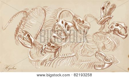 An Hand Drawn Vector: Hydra