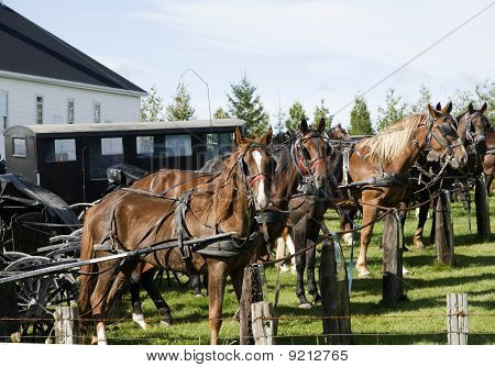 horse and buggies in the country