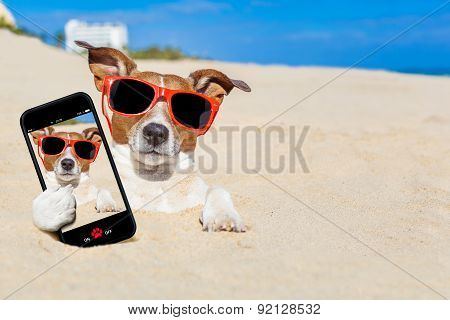 Dog Buried In Sand Selfie