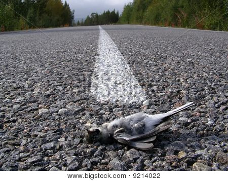 The Killed Bird