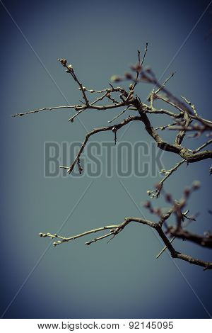 A Photo Of A Tree Banch With No Leaves With An Applied Vintage Filter