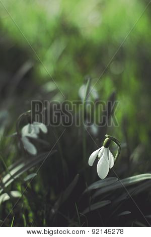 A Photo Of The Flower Lily Of The Valley With An Applied Vintage Filter