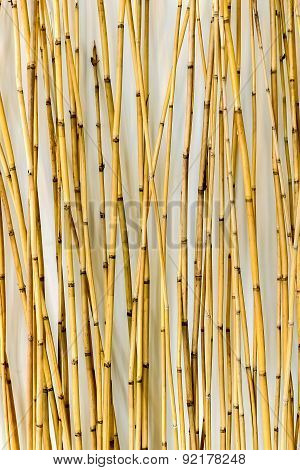 Bamboo Background For Interiors Design