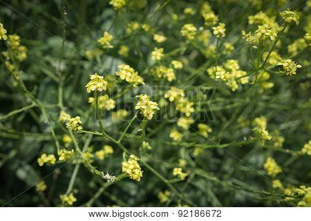 Groups Of Yellow Wildflowers