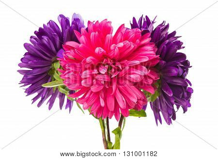 flowerhead, asteraceae, aster isolated on white background