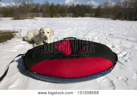 red and black material snow inner tubing (toobing) on the white snow and dog behind it