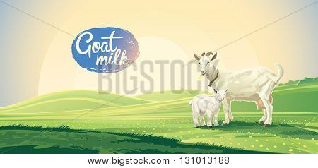 Country landscape with goat and kid for meadow, for pasture. Vector illustration.