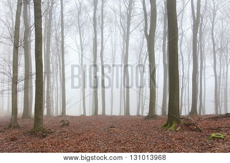 Mist in the forest at a day