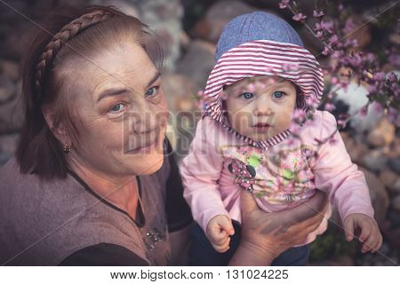 Baby with his grandmother learns the beauty of the world . Together they are looking at a blossoming sakura tree