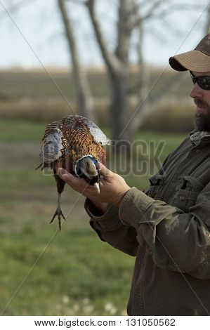 A pheasant hunter with a Rooster Pheasant