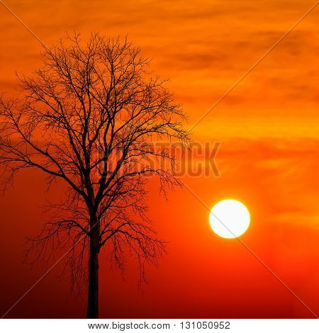 silhouette dead tree at sunset abstract for background