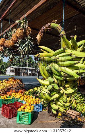 Banana Bunches Latin America street market Ecuador Guayas province