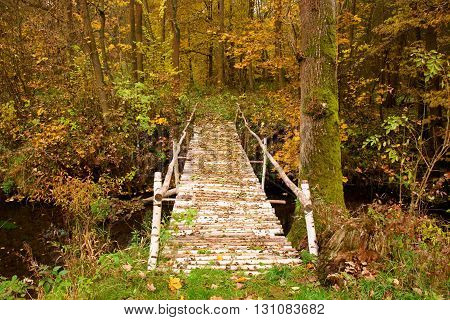 Natural Bridge Created From Birch Trunks With Black And White Bark. Path  In A Colorful Autumn  Fore