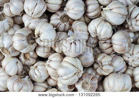 Common Garlic Allium Garlic Allium sativum L.