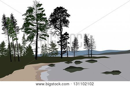 illustration with dark forest isolated on white background