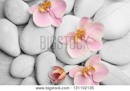 Spa stones and orchid flowers closeup