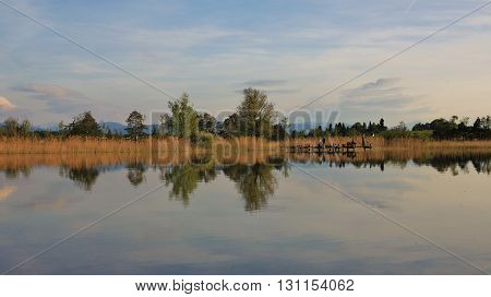 Trees mirroring in Lake Pfaffikon. Evening scene in Zurich Canton Switzerland.