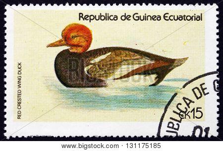 EQUATORIAL GUINEA - CIRCA 1978: a stamp printed in Equatorial Guinea shows Red Crested Wing Duck Netta Rufina Bird circa 1978