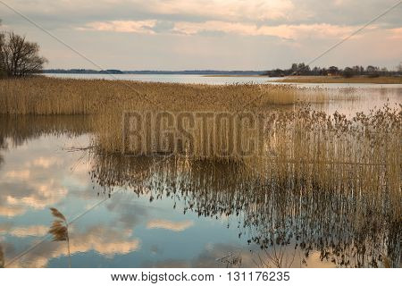 Lake Seliger in the spring. Thickets of dry reeds along the shore.
