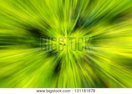 Abstract blurred by fresh green plant background