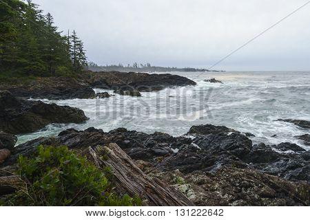 Wild Pacific Ucluelet Tofino Vancouver Island British Columbia Canada