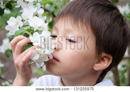 Boy Smelling Blossoming Apple Tree Flowers