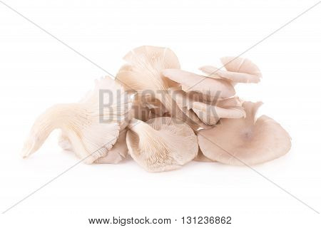 Mushroom On White Background.