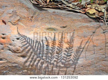 Bracken fern shadow on colourful gumtree bark