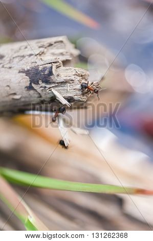 Close up of ants on a tree branch