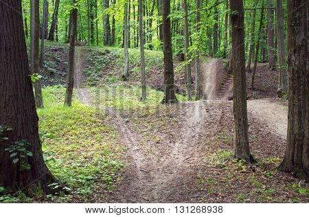 forked path through enchanted spring green forest