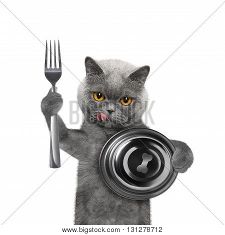 Cat waiting for some food -- isolated on white