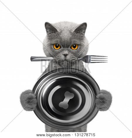 cat wants to eat and hold bowl and fork -- isolated on white