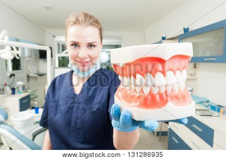 Woman Dentist Smiling And Holding A Jaw Teeth Model