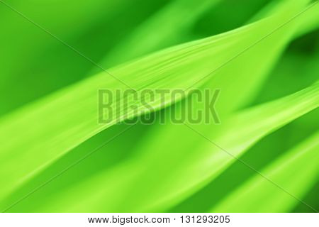 Abstract blurred green Grass background. Landscape orientation.