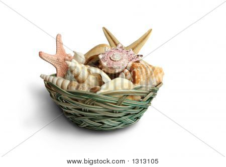 seashells from holiday on a white background poster