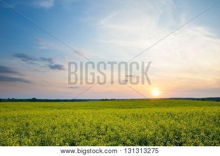 The sun is setting over a field of oilseed rape. Masuria Poland.