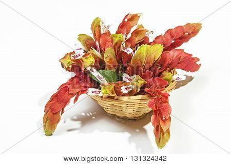 Display Of Pink Prawn Flowers In Wicker Basket
