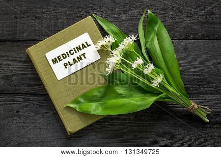 Medicinal plant ramson (allium ursinum) and herbalist handbook. Ramson - edible plant nectariferous and is used in horticulture