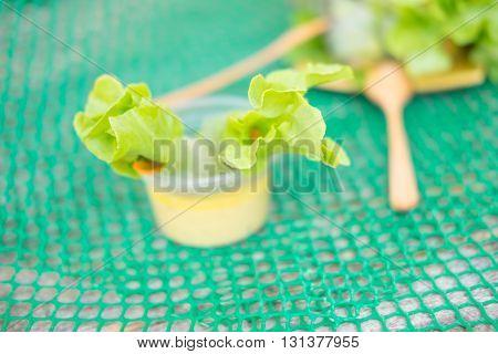 salad rolls : clean food concept healthy food