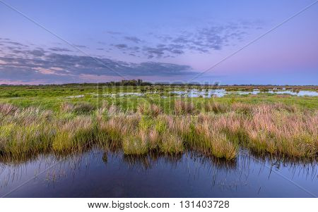 Wetland teeming with bird life in natura 2000 area Zuidlaardermeergebied nature reserve poster
