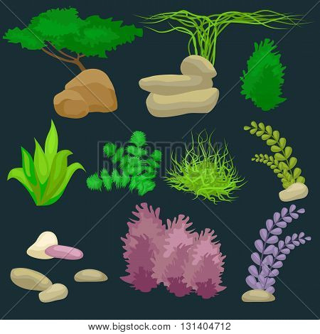 Different kinds of algae and pebbles set isolated on dark vector illustration