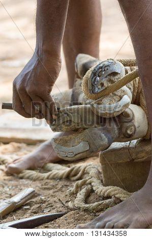 Chettinad India - October 16 2013: Blacksmith near Namunasamudran takes old shoe of buffalo foot. Two feet of buffalo in action photo focus on hands blacksmith and feet of animal.