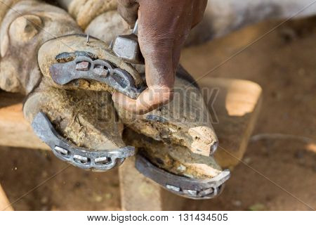 Chettinad India - October 16 2013: Blacksmith near Namunasamudran nails new shoe on buffalo foot. Action photo focus on hands blacksmith and feet of animal.