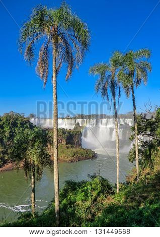 Iguazu Falls on the Argentina and Brazil borders, with palm trees and blue sky