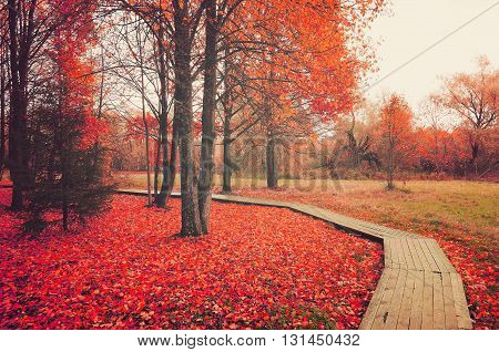 Autumn foggy landscape - wooden walkway among the red fallen leaves - autumn forest landscape soft focus processing