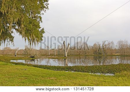 Quiet Elm Lake in the Evening in Brazos Bend State Park in Texas