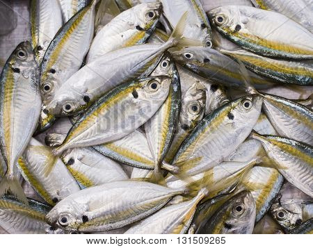 Fresh yellow-stripe scad in the market Thailand.